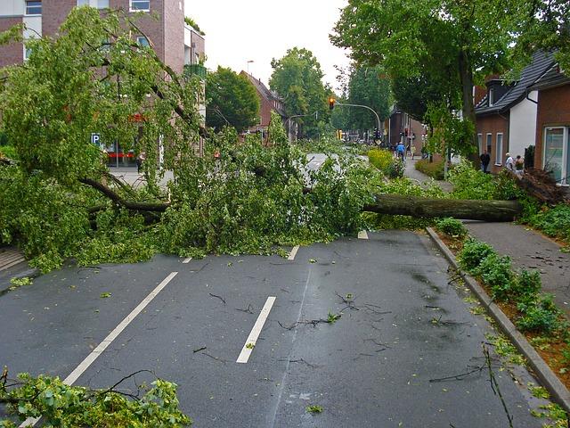 strom přes silnici